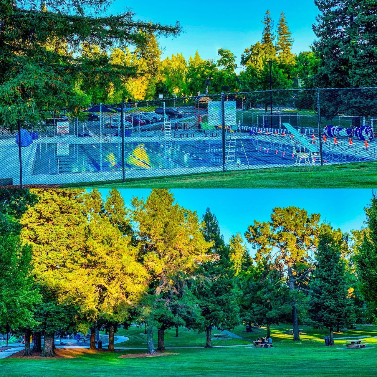 plant, tree, grass, day, sport, nature, park, green color, group of people, playing, leisure activity, real people, park - man made space, outdoors, autumn, soccer, team sport, recreational pursuit, large group of people, men, change