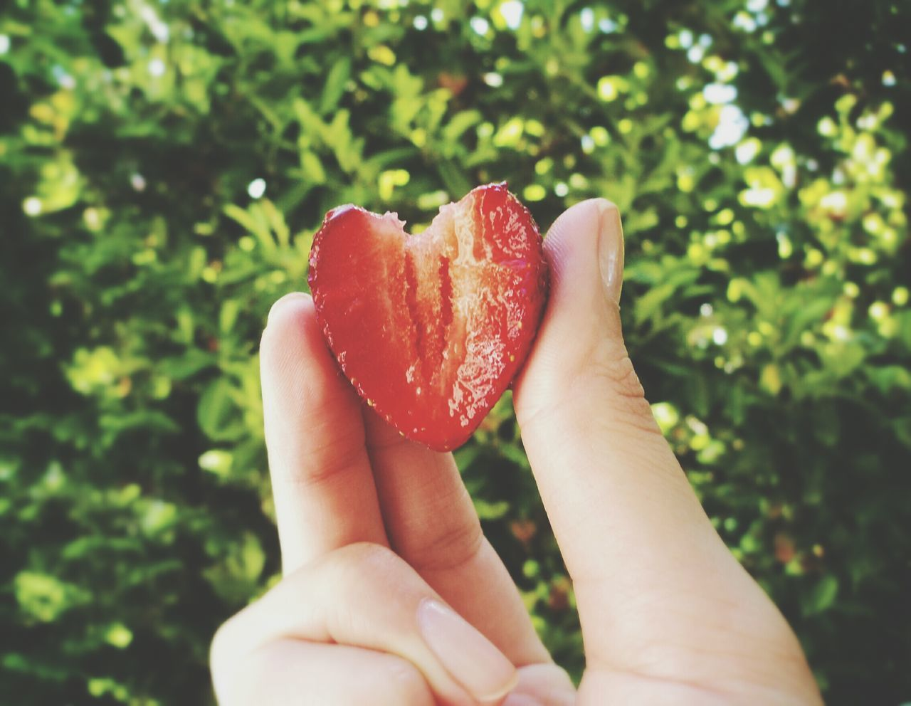 Close up of strawberry in woman' s hand