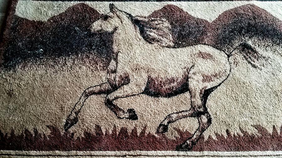 Outdoors Horse Running Horse Wild Horse Horse Art
