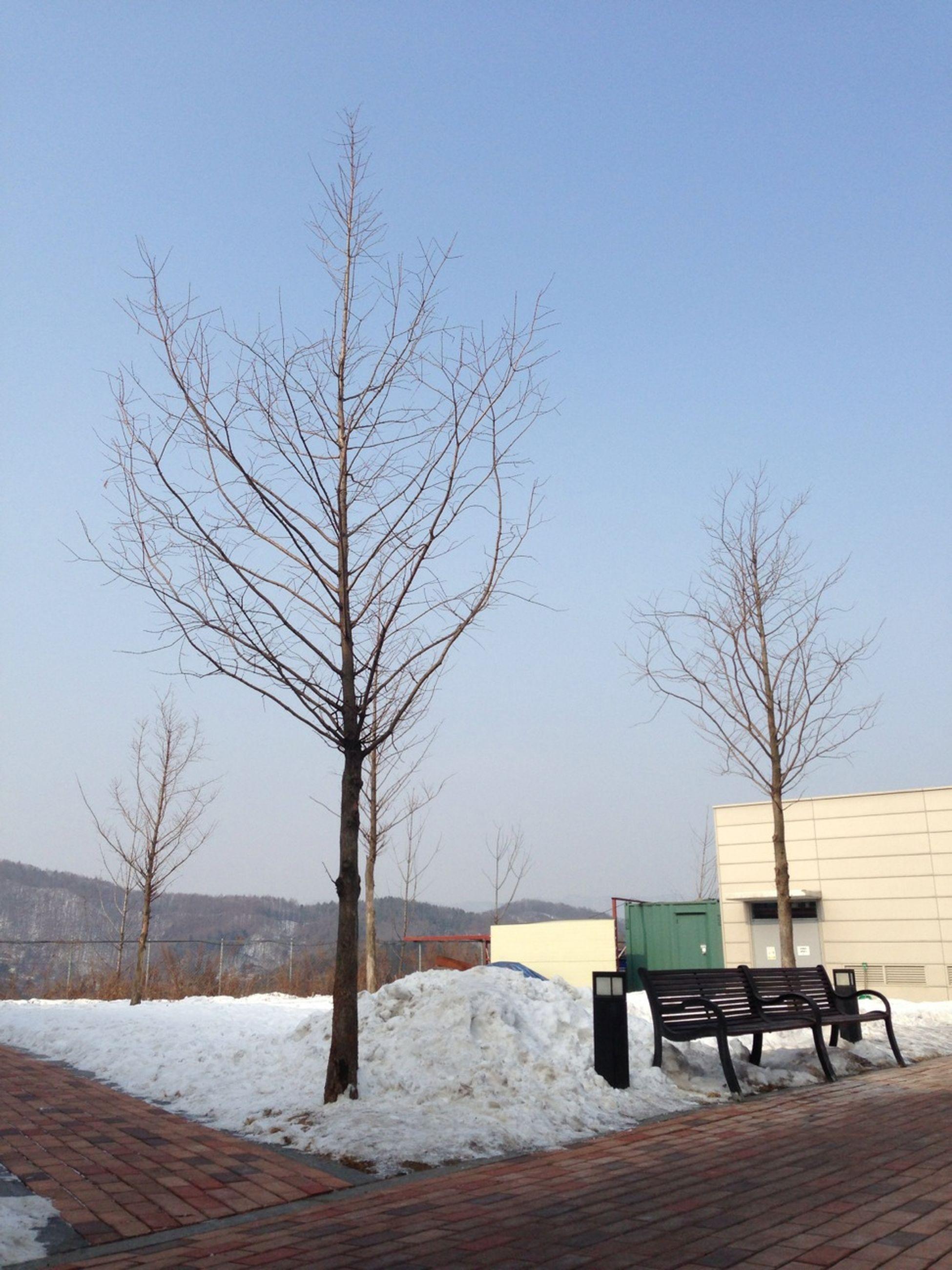 bare tree, snow, winter, cold temperature, tree, clear sky, tranquil scene, tranquility, scenics, branch, landscape, nature, blue, beauty in nature, season, bench, field, sky, day, non-urban scene