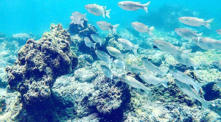 Underwater Sea UnderSea Water Large Group Of Animals Coral Nature Sea Life Animals In The Wild Animal Themes Scuba Diving Rock - Object No People Swimming Day Outdoors Live For The Story