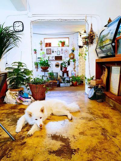 Itmustbeablessingtoliveasadog. White Dog EyeEm Cafe