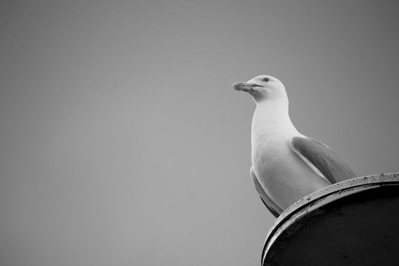 Hi! Seagull Sea Sky Blackandwhite BeW Bird Photooftheday Summer View Panorama Beach Enjoying Life Free Freedom Chilling Chill Place Brighton Flying Fly Liberty Light First Eyeem Photo