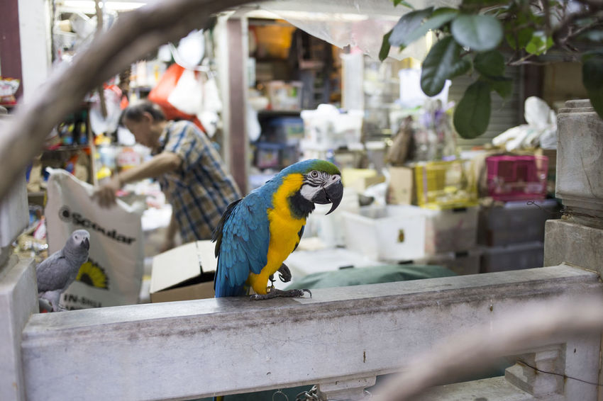 Animal Animal Themes Animal Wildlife Animals In The Wild Architecture Bird Building Exterior Close-up Day Focus On Foreground Macaw Nature No People One Animal Outdoors Parrot Perching Selective Focus Vertebrate