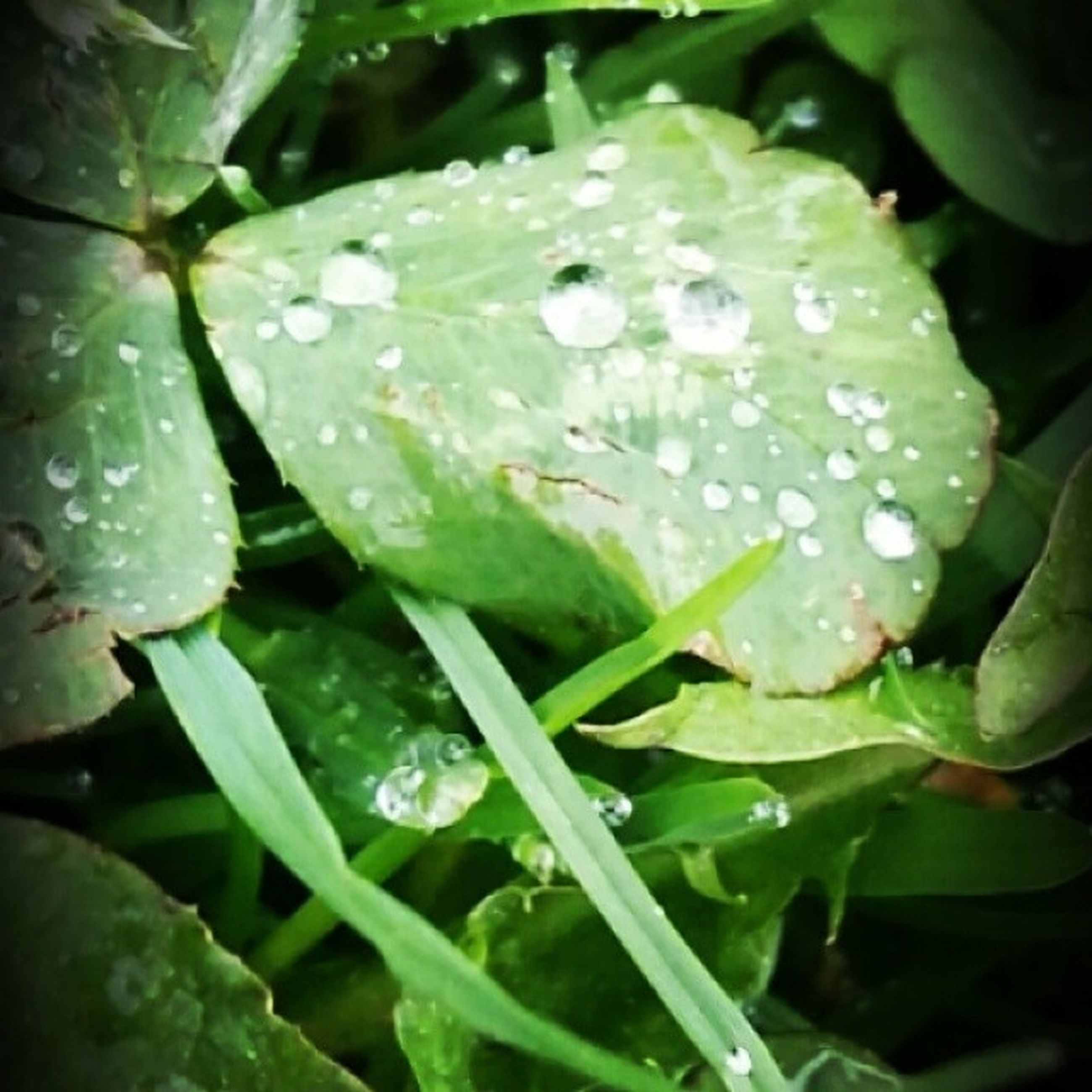 drop, water, wet, growth, leaf, green color, freshness, close-up, dew, nature, plant, beauty in nature, fragility, raindrop, rain, droplet, focus on foreground, water drop, weather, purity