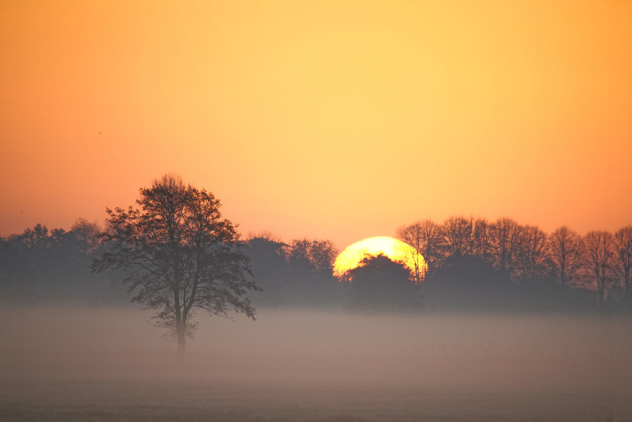 SILHOUETTE TREES BY PLANTS AGAINST ORANGE SKY