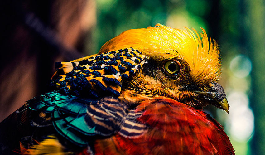Animal Themes Animal Wildlife Animals In The Wild Bird Close-up Day Nature One Animal Outdoors