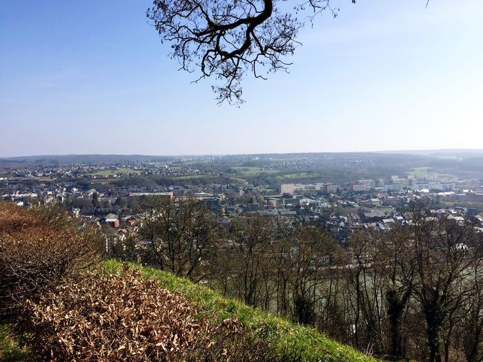 Tree Cityscape