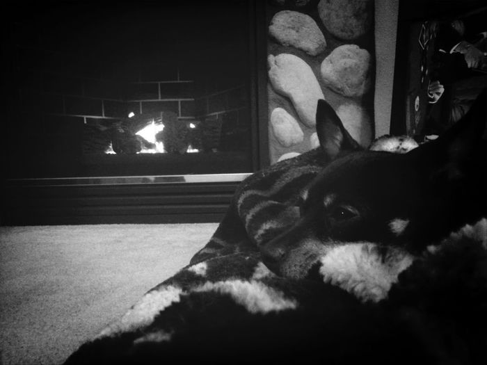 Warming up by the fire.
