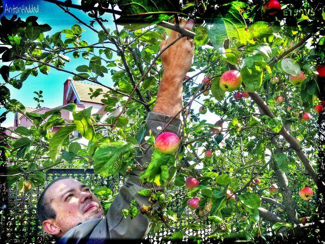 Reaching for the best apple ! Mahilyow NEM Memories EyeEm Best Shots EyeEm Best Edits