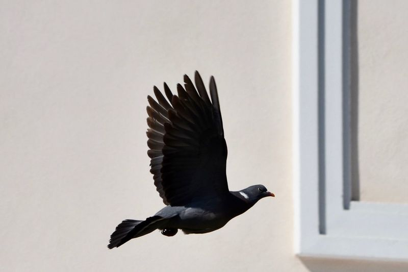 Exceptional Photographs Let's Do It Chic! Eye4photography  EyeEm Best Shots Respect For The Good Taste Bird Animal Themes One Animal Flying Light And Shadow Animals In The Wild Spread Wings