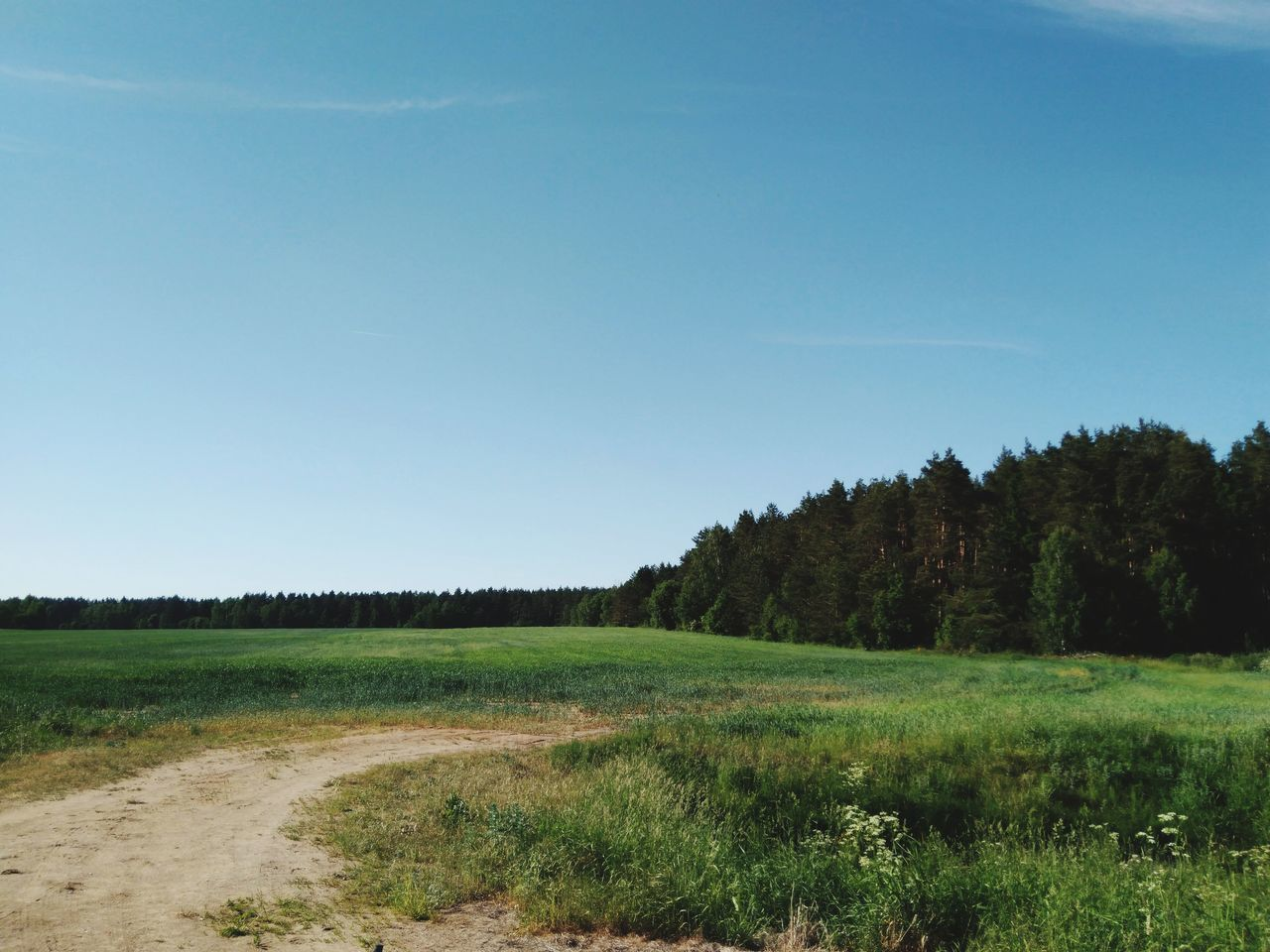 landscape, sky, environment, grass, land, plant, field, nature, clear sky, tree, growth, copy space, tranquility, freedom, blue, no people, tranquil scene, positive emotion, non-urban scene, vistas, outdoors