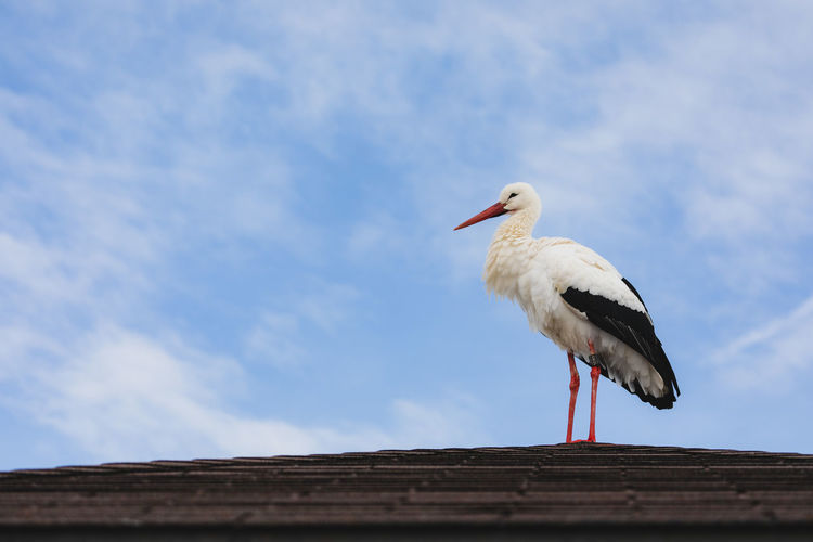 Bird Animal Wildlife Sky Animals In The Wild Animal Animal Themes Vertebrate One Animal Low Angle View Day Cloud - Sky Nature No People Perching Outdoors Stork Wood - Material White Color Architecture Roof Beak