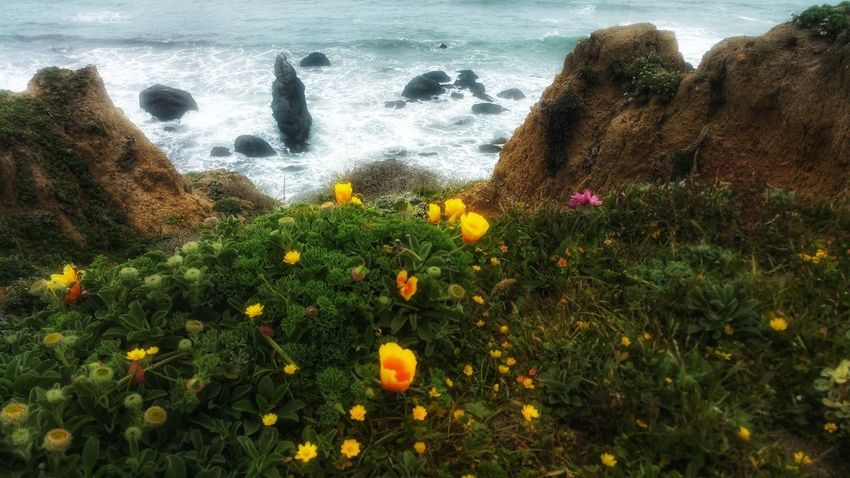 Walking path wildflowers along the cliffs edge. Poppies  Golden Yellow Ocean Zen Background Meditation Moment Copy Space Wildflowers Headland Shimmering Dreamy Flower Water Sea Beach Grass Growing Blooming In Bloom Tranquil Scene Tranquility Scenics Passion Flower Countryside Idyllic Fragility Young Plant Calm
