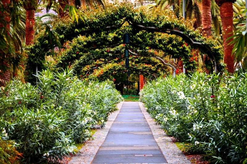 www.starttoshoot.com Beautiful Beauty Bush Flora Forest Nature Park Path Plants Santa Cruz De Tenerife SPAIN Tenerife Trail Trees Wood