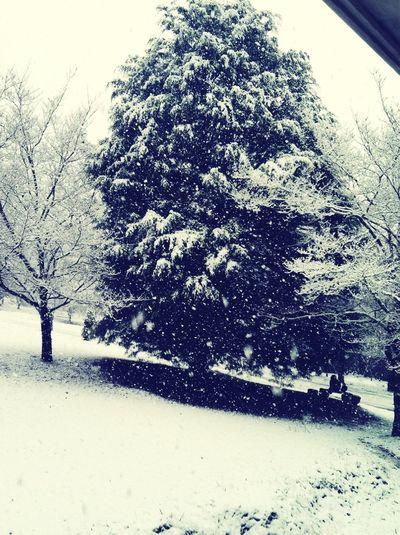 Snow In Bama