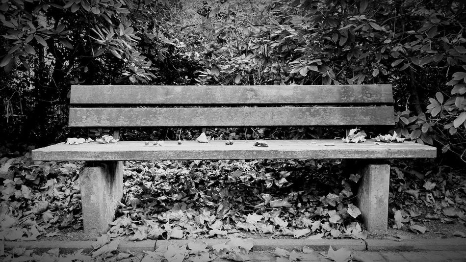 """""""Sleepy bench"""" - Outdoors Day Park - Man Made Space Seat Wood - Material No People Herbstblätter Leaf Autumn Nature Omegatainment Herbst Wooden Bench Graveyard Peaceful"""