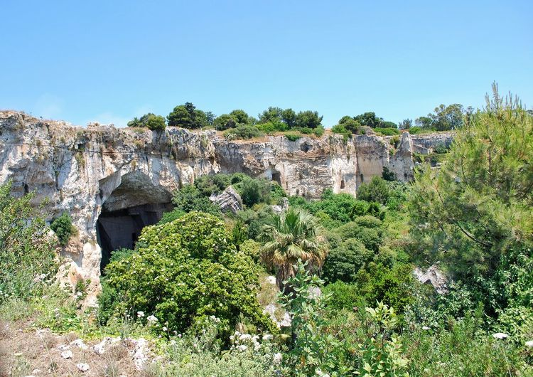 Archaeological Park... Syracuse. Sicily Syracuse  Sicily Archaeological Sites Park Archaeological Ear Of Dionysius Green No People Travel Destinations History Tree Flower Clear Sky Sky Plant Landscape Growing