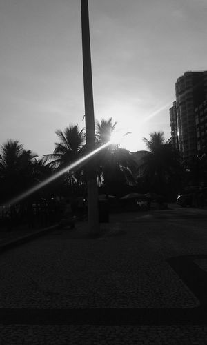 Sunset_collection Sunset Silhouettes Sun Light Through Trees Sunlight ☀ Sunlight And Shadow Bnw_friday_eyeemchallenge Bnw_collection Blackandwhite Photography Black & White Streetphotography Streetphoto_bw