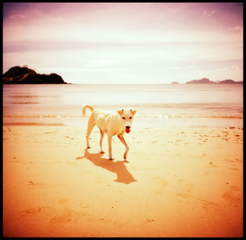 The peaks and lows of Nacpan Beach Analogue Photography ASIA Boat Bug Catamaran Catamaran Sunset Dog And Beach Dog At The Beach Dog On A Boat El Nido Fuji Velvia Island Lomography Medium Format Nacpan Nacpan Beach No People Philippines Seaside Sunset Sunset Beach Tail The Great Outdoors - 2017 EyeEm Awards Twin Beaches Xpro
