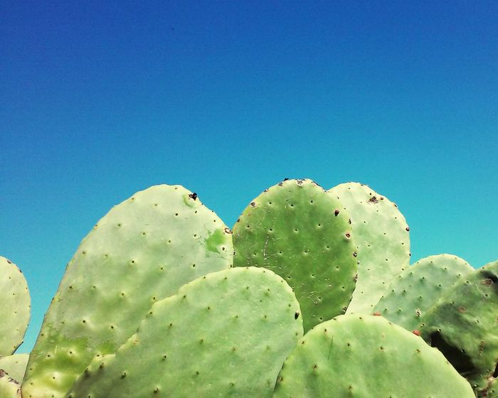 Minimal Growing Cactus Cactus Leaf Clear Day Blue Sky Tree Bright Colours