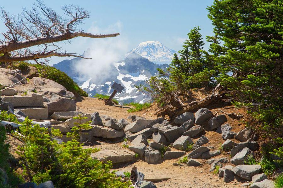 Tree Rock - Object Tranquil Scene Scenics Mountain Tranquility Nature Beauty In Nature Solitude Sky Outdoors Rocky Mt. Rainier National Park Mt. Rainier Snowcapped Mountain Landscape Mt. Hood