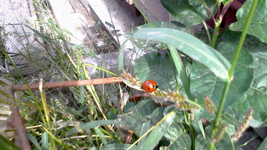 My Backyard Ladybeetle Green Plants Ladybug Leafs Wolfzuachis Eyeem Market