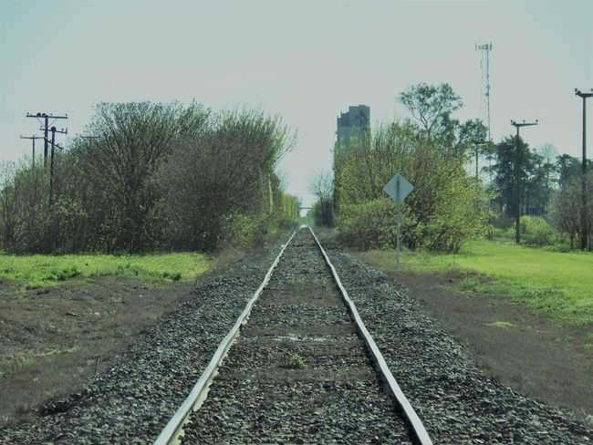 Railroad Track Tree Day Transportation Rail Transportation No People The Way Forward