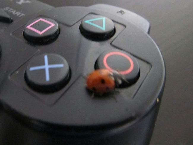 Control Push Button Close-up Ladybird Joypad Game Ladybug Nature Technology Controller Close Up Technology Insect