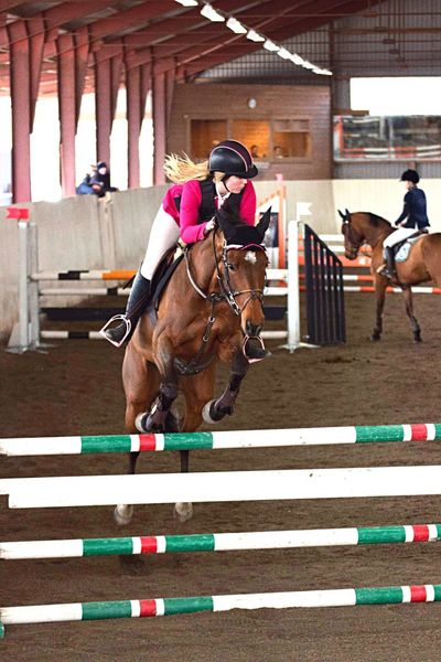 Showjumping Horses Competition Horse Sweden Swedish Sport Eventing