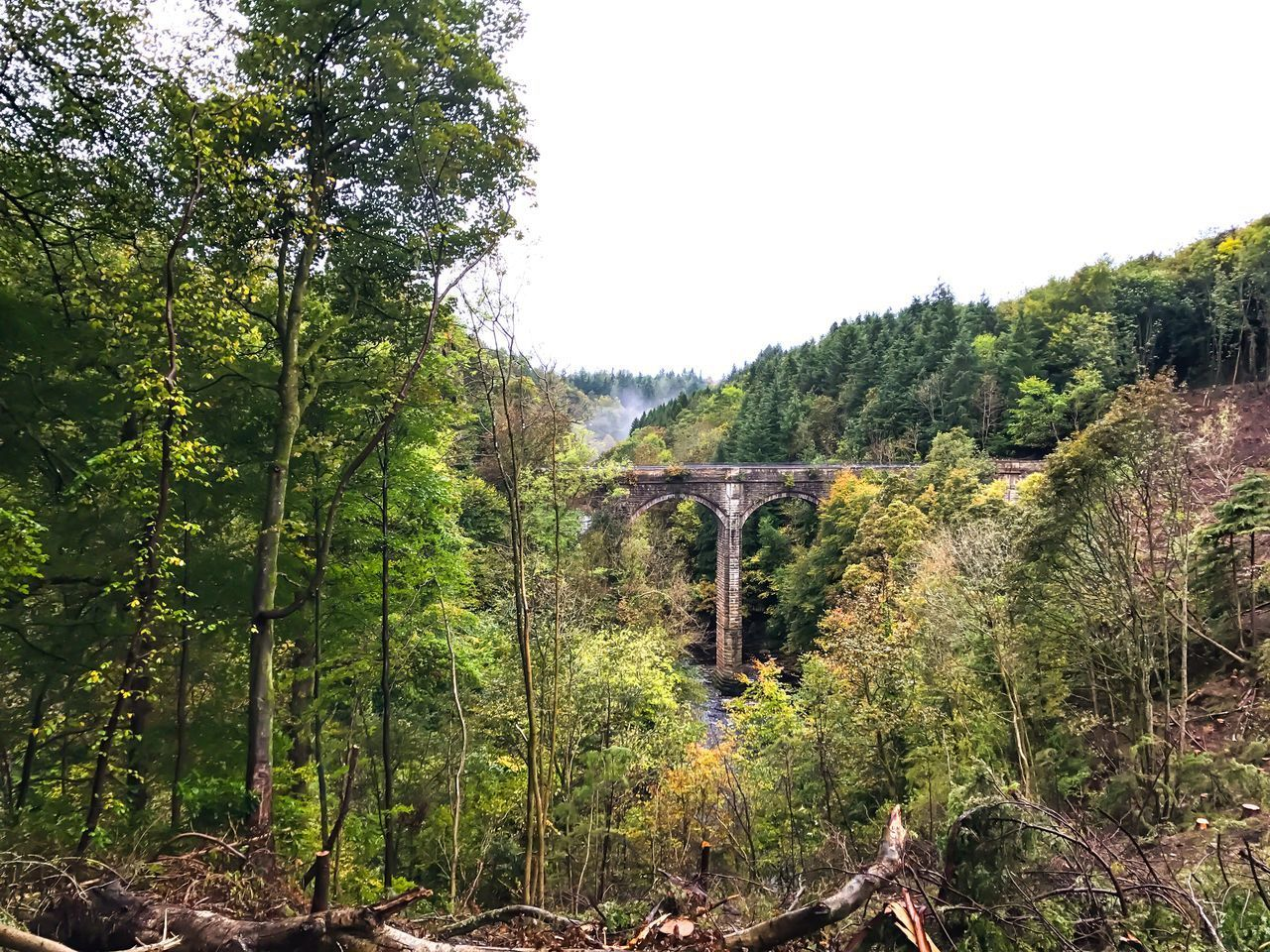 bridge - man made structure, connection, tree, transportation, arch, forest, day, no people, outdoors, growth, rail transportation, architecture, nature, built structure, sky