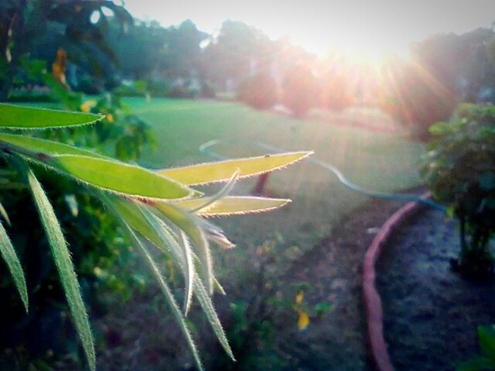 Showcase: January Leaf Gardanphotography Sun Light Nature_collection First Eyeem Photo