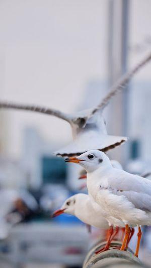 Seagulls perching on a bird