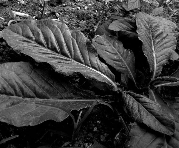 Full Frame No People Nature Leaf Outdoors Science Close-up Day The Week On EyeEm EyeEmNewHere Eyeem Photography EyeEm Best Edits Beauty In Nature Eyeemphoto EyeEm Selects Growth Nature Bwphotography Bw Bw_collection Bw_lover Bw Photography