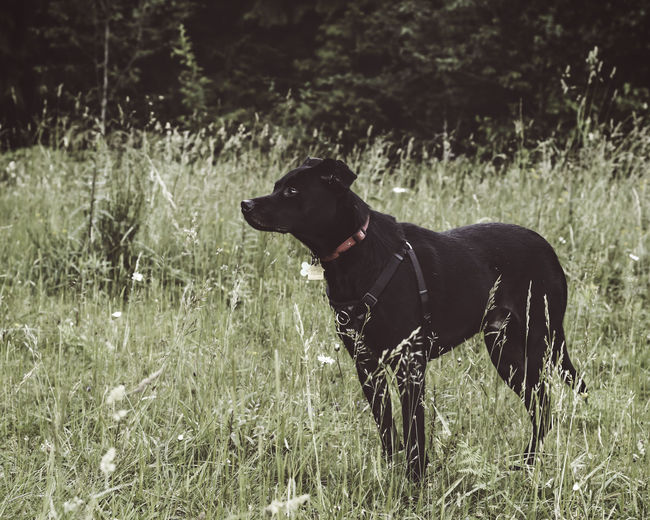 Beauty In Nature Black Color Day Dog Field Focus On Foreground Grass Grassy Growth Landscape Mammal Nature Outdoors Pets Plant Selective Focus