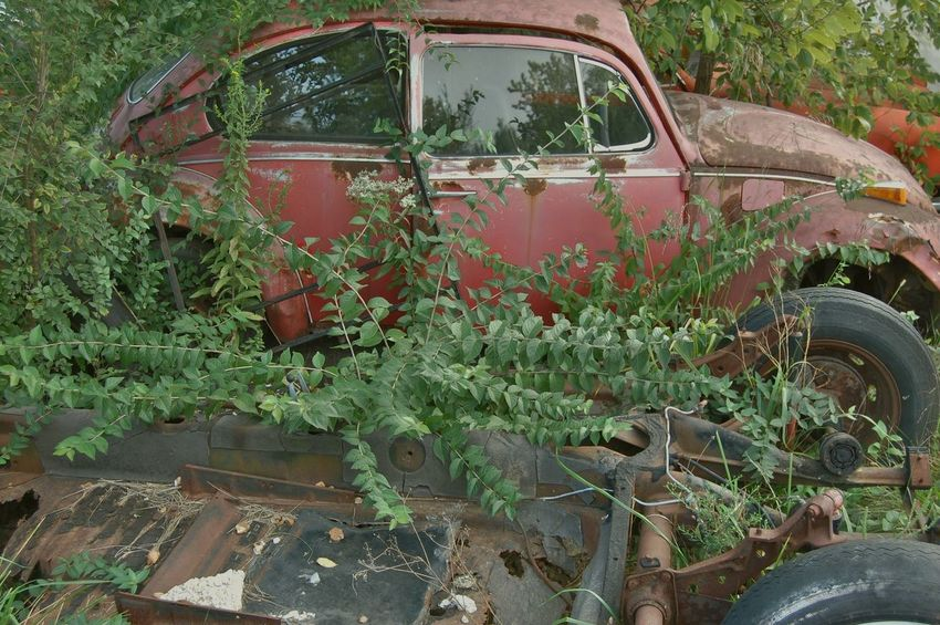Abandoned Decrepit Junk Junkyard Land Vehicle Red Volkswagen Beetle Volkswagon