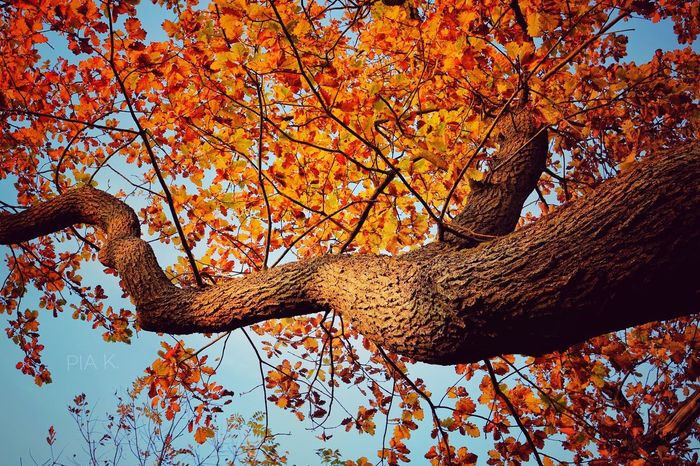 Tree Branch Autumn Nature Leaf Low Angle View One Animal Tree Trunk Beauty In Nature Day No People Animals In The Wild Outdoors Animal Themes Sky Forest Germany Rheinland-Pfalz  Bad Dürkheim Deutschland Beautiful