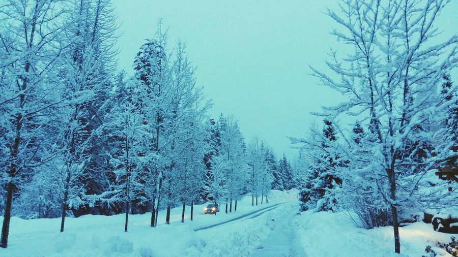 Whistler Canada Snowstreet Snowtree Tree Snow Winter Forest Frozen Snowflake Deep Snow Snowing Cold