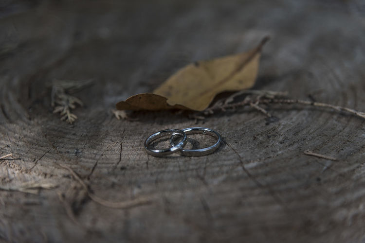 Close up of Wedding rings on tree stump Selective Focus Plant Part Leaf Close-up No People Still Life Nature Dry Wood - Material Table Day Tree Outdoors Two Objects Paper High Angle View Love Jewelry Autumn Positive Emotion Change Leaves Personal Accessory Bark
