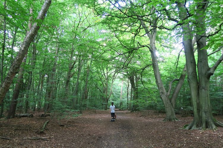 Tree Growth Nature One Person Walking Green Color Beauty In Nature Forest Day Outdoors Tranquility Tranquil Scene Branch The Way Forward Real People Tree Trunk Men People Norfolk Thetford Forest Thetford