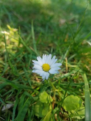 Flower Nature Plant Fragility Flower Head Outdoors Petal Beauty In Nature Uncultivated Close-up Green Color No People Day Growth Freshness Living Organism Grass