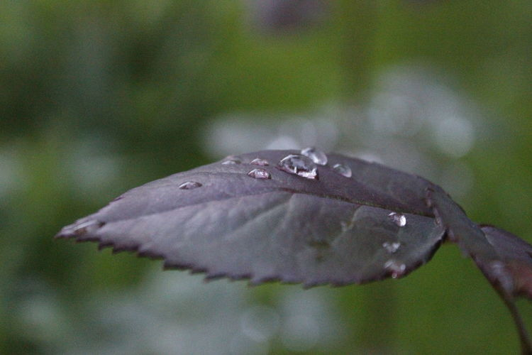 Rainy... Drop