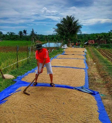 every rice grain worths every drop off sweat counts Edisinyamar Sefo  tour d'UG
