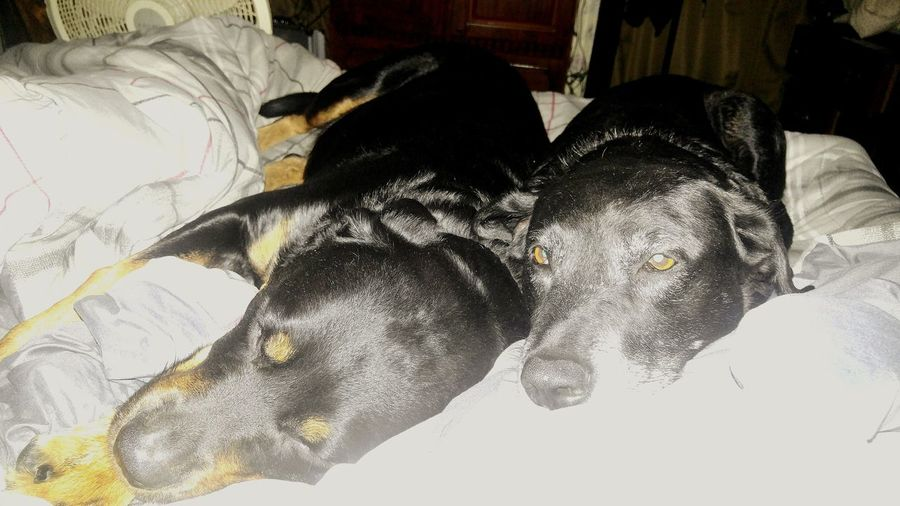 bed hogs lol
