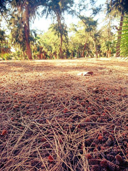 Defocus Woods