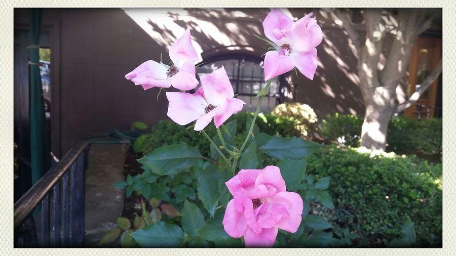 Flowers Boston Sundy Funday