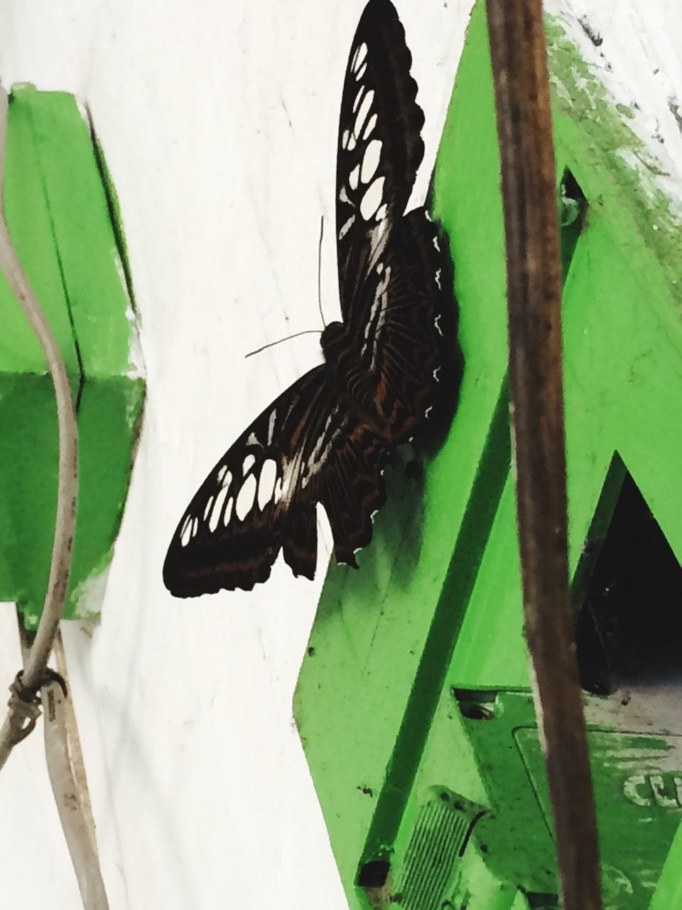 Low Angle View Of Butterfly On Wall