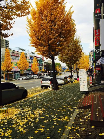 Autumn Leaves First Eyeem Photo Fall Autumn Korea