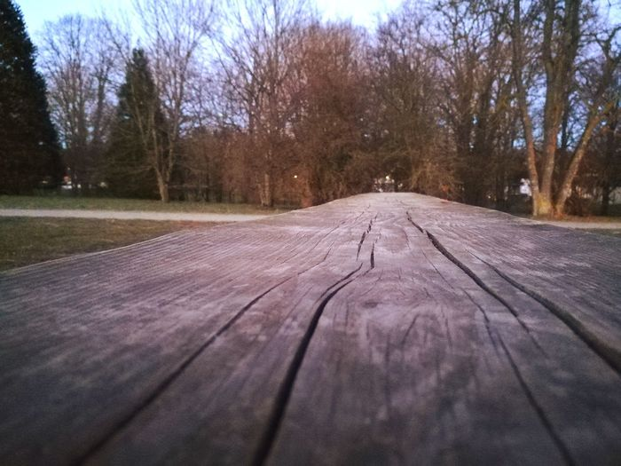 Park Planks Of Wood Bare Tree Beauty In Nature Diminishing Perspective Straight Outdoors