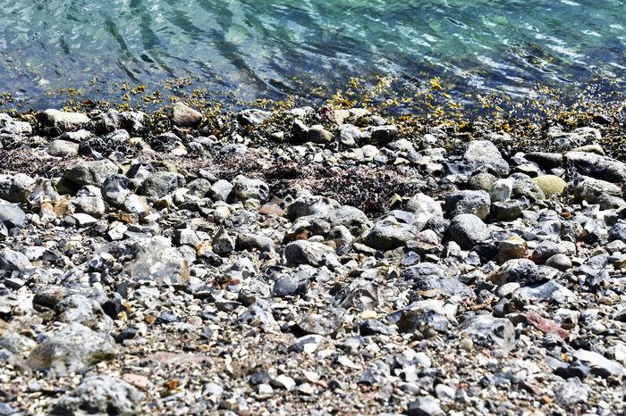 Blue Color Denmark Green Color Pebble Beach Seaweed Beach Grey Sand Sea Stones & Water